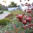 六本木の紅