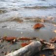 晩秋の榛名湖