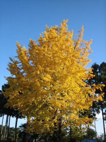 秋らしい写真の定番だね