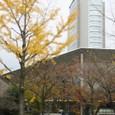 音楽堂と市役所